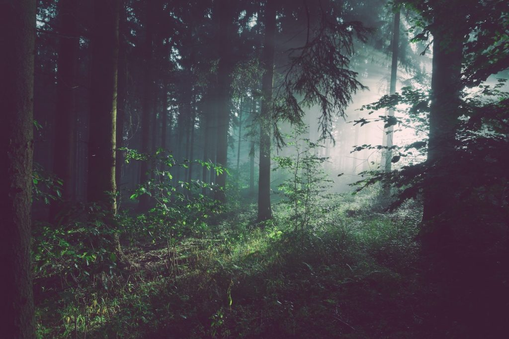 Forest Bathing health benefits - forest bathed in light