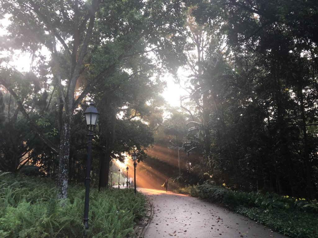 Circadian Rhythm morning light breaking through the trees in and urban park
