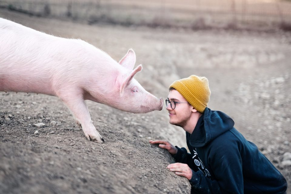 human connection man looking pig in the eye