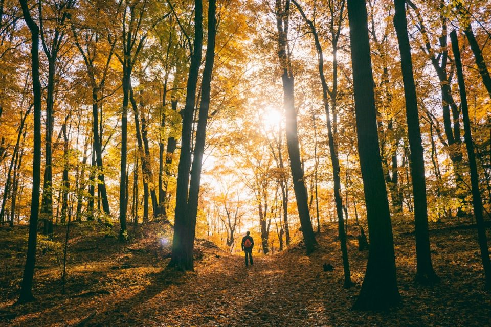 Make more space in your day person back in nature hiking