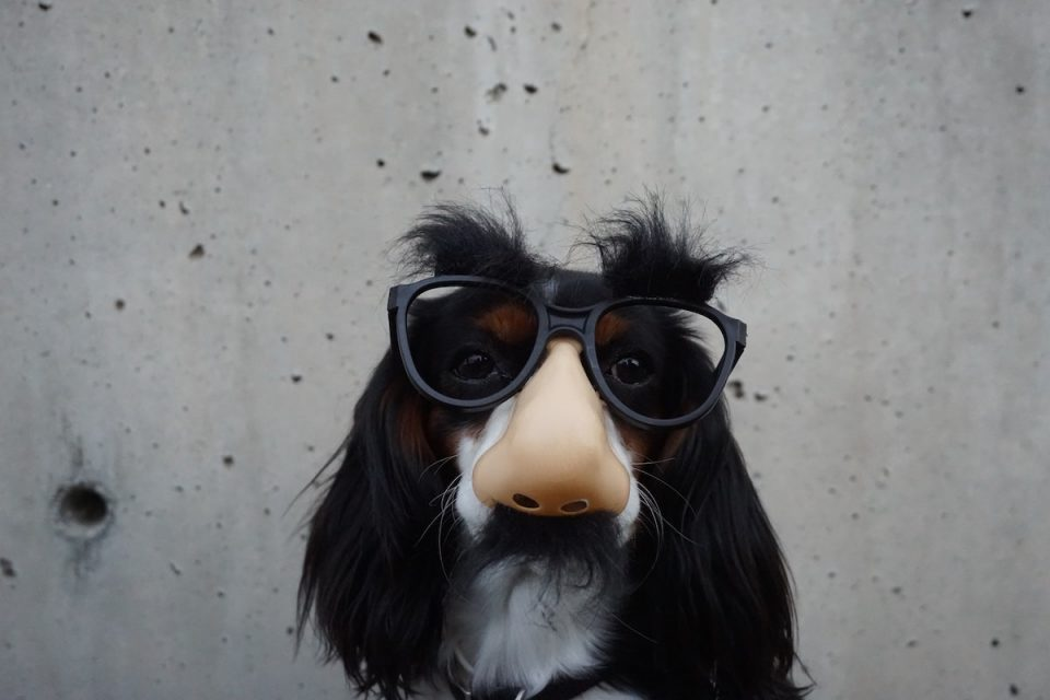 Not taking it all too seriously - dog in comedy specs