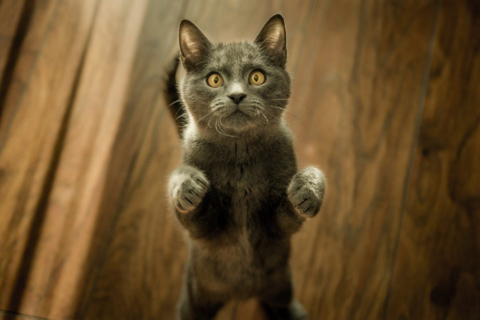 Cute cat picture connecting with animals for wellbeing