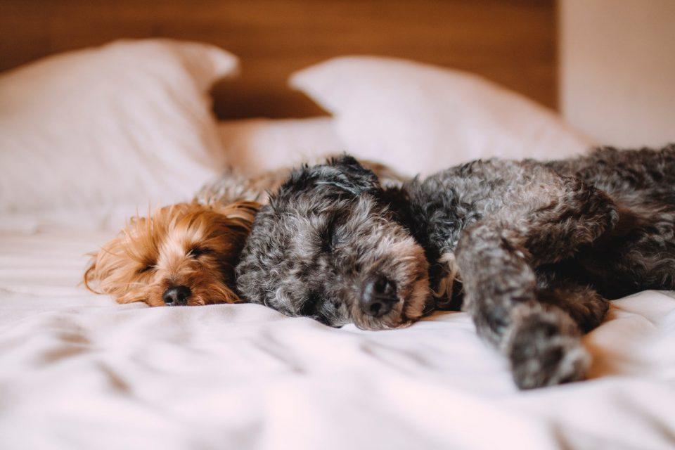 sleeping-routine-sleepstaircase-wellbeing-health-mentalhealth-bodyshotperformance-fitness-digestion-bodycomposition