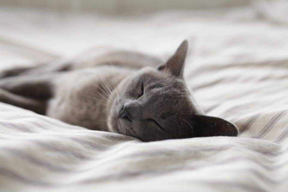 cat sleeping in why we sleep podcast